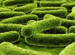Крутые вирусы против бактерий